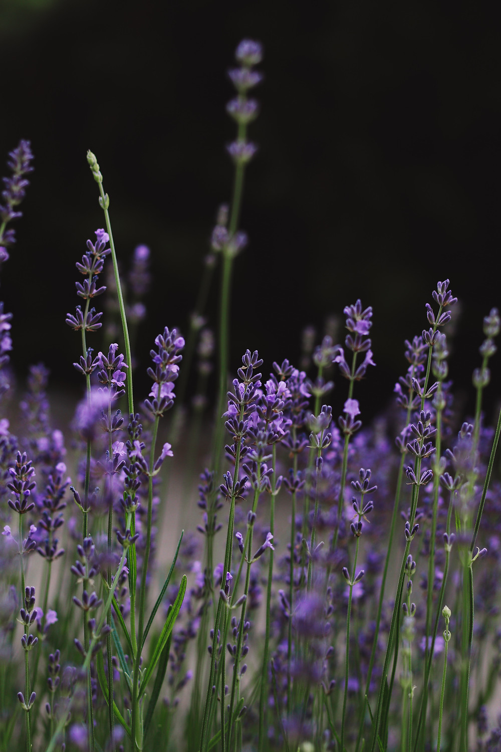 What Terpenes Are Good For Sleep? by Peak Supply Co