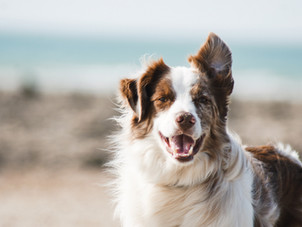 Dog Vaccine Schedule: Timeline for your Puppy