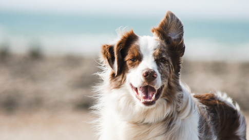 Pawsom Charity Dog Show