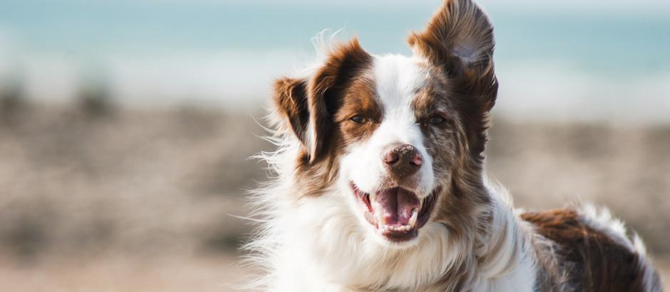 Hoe leren honden?