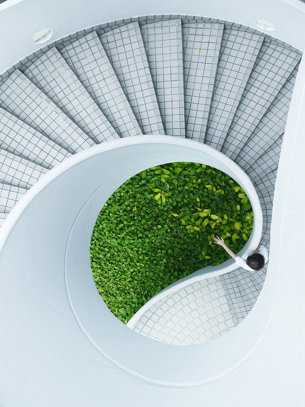 A spiral staircase with leaves