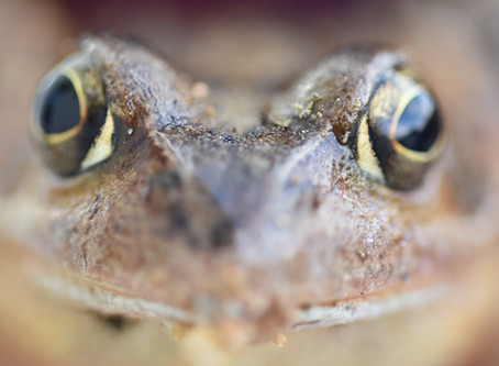 Signs (and Sounds) of Spring in Ontario - Frogs