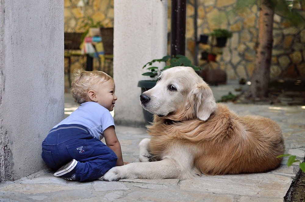 Making your dog a great guardian for your child