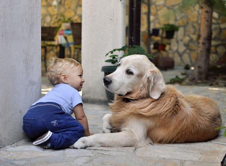 תינוק חדש והקשר בינו לבין החיה
