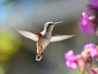 Doe mee met de tuinvogeltelling eind januari