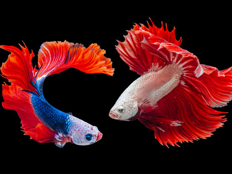 Freshwater Fish 5/13