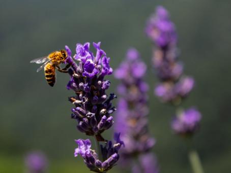 Kildare Biodiversity Week 16th - 24th May 2020 - Online!