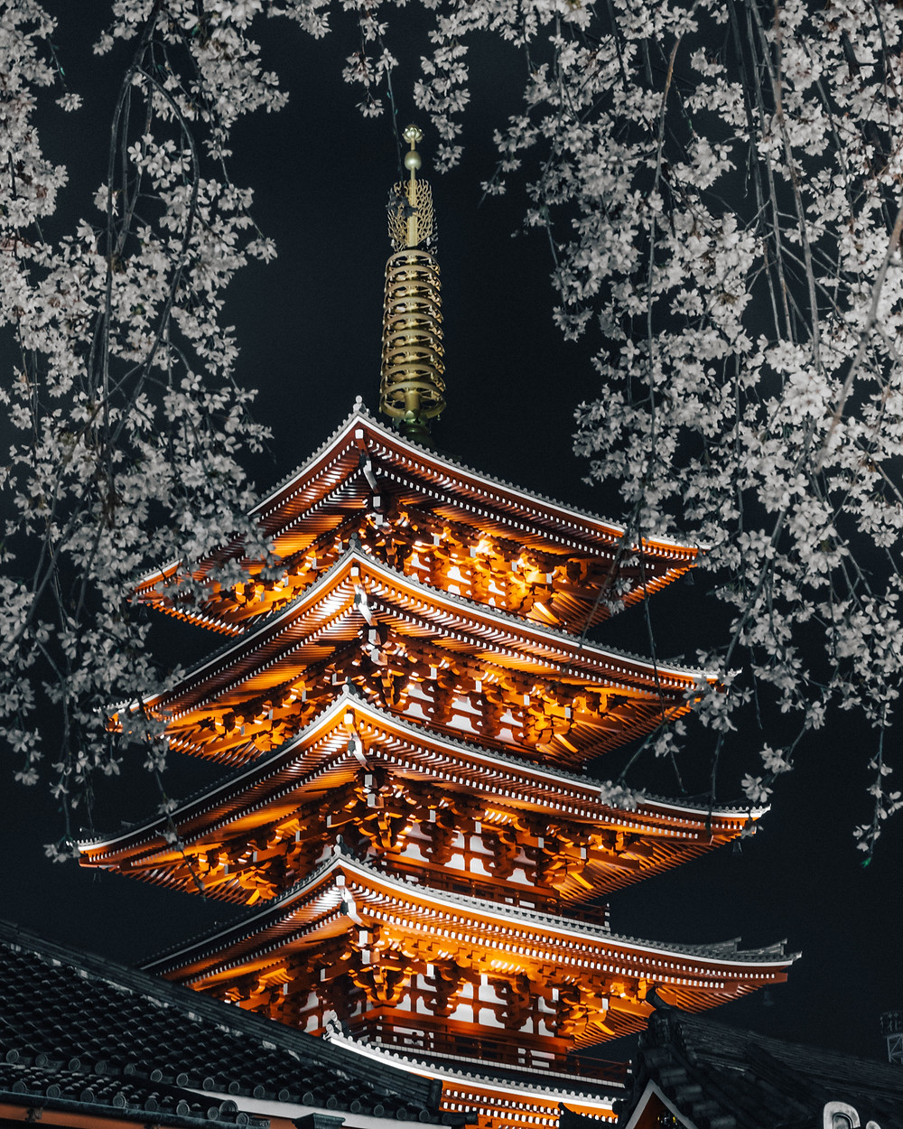 Japanese Pagoda with Cherry Trees