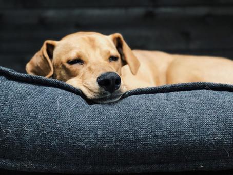 Our Philosophy On Pet Sedation
