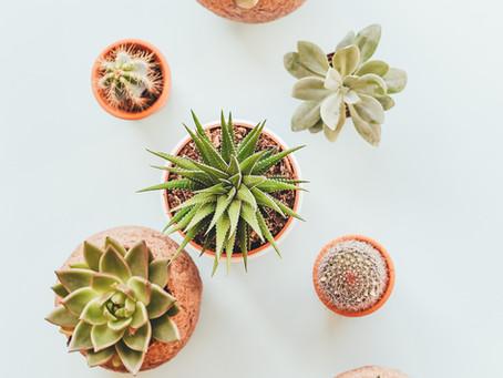 Il mio viaggio nel mondo delle piante.