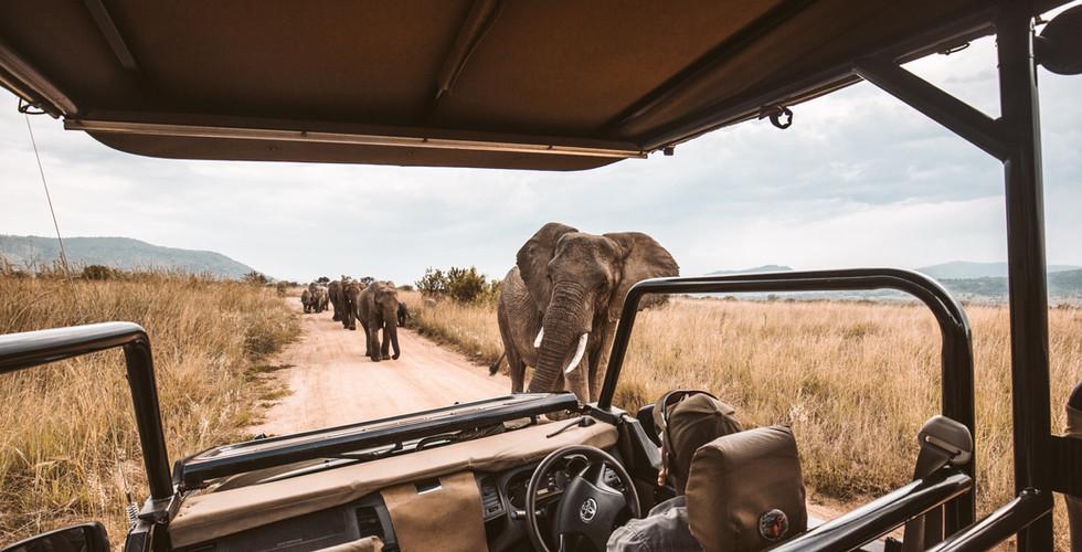 image safari