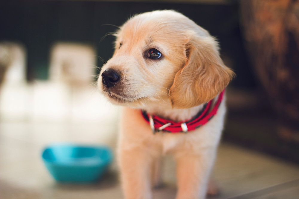GPS tracking for your pets via their collar.