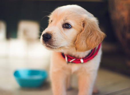 Socializing Your Puppy at Home