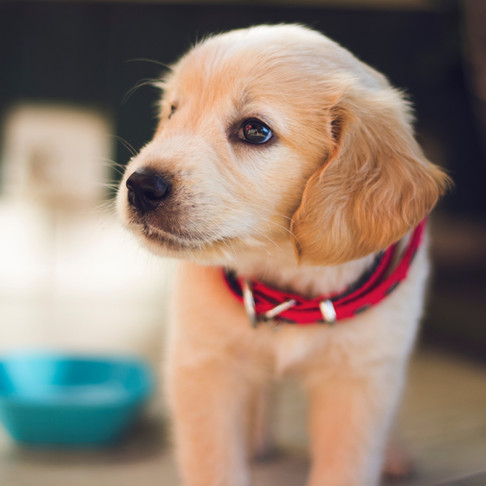 How Your Pup Digests It's Food