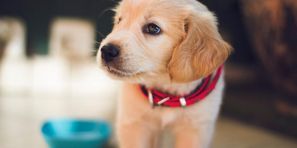 Puppy Program (8-week/Virtual) -Thursdays, at 6:00pm EST