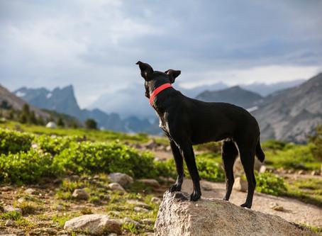 Как да научим кучето си да не бяга?