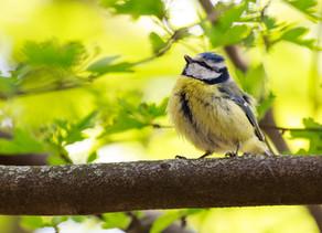 Birds Watching Staycation Retreats