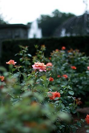 Lys Jardins - Inspiration plantes de jardin