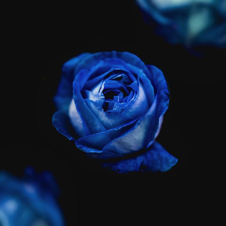 Formação - Meditação das Rosas