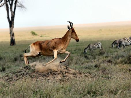 Η έκθεση του ΠΟΥ για την πανδημία δείχνει σαφή σχέση των ζωονόσων με την απώλεια της βιοποικιλότητας