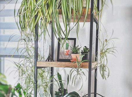 How to Use Feng Shui to Support Your Emotional Well-Being