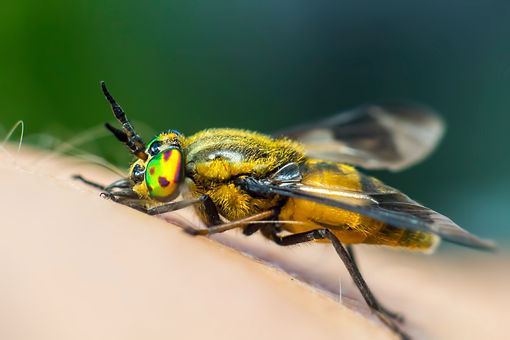 Wasp control in Spanish Fork