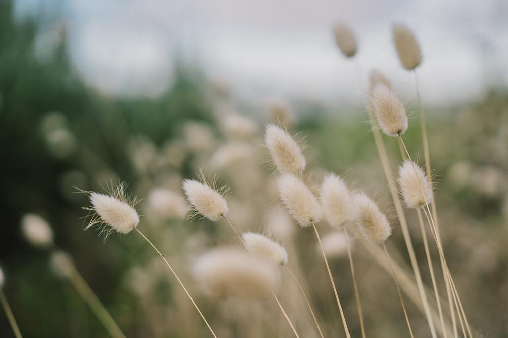 Sacred Plant Co Rue Seeds