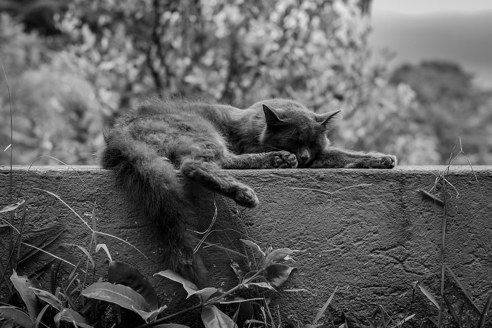 Black and white photo of a cat sleeping on a ledge with a tree in the background.