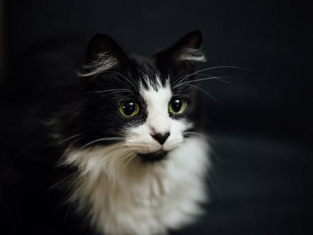 Kediniz Size Ne Söylüyor?