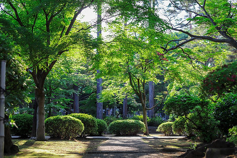 Image of shrubs and trees by Mathis Jrdl