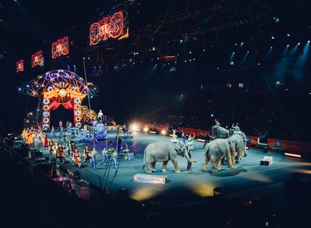 """Gestrandeter """"Circus Safari"""" bleibt bis Juni auf Standort"""