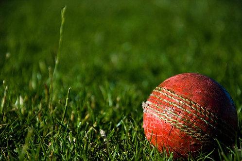 Cricket - (Medium) Pack # 2