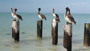 Man-on-the street: Uncommon Flock