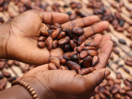 The health and spiritual benefits of ceremonial cacao