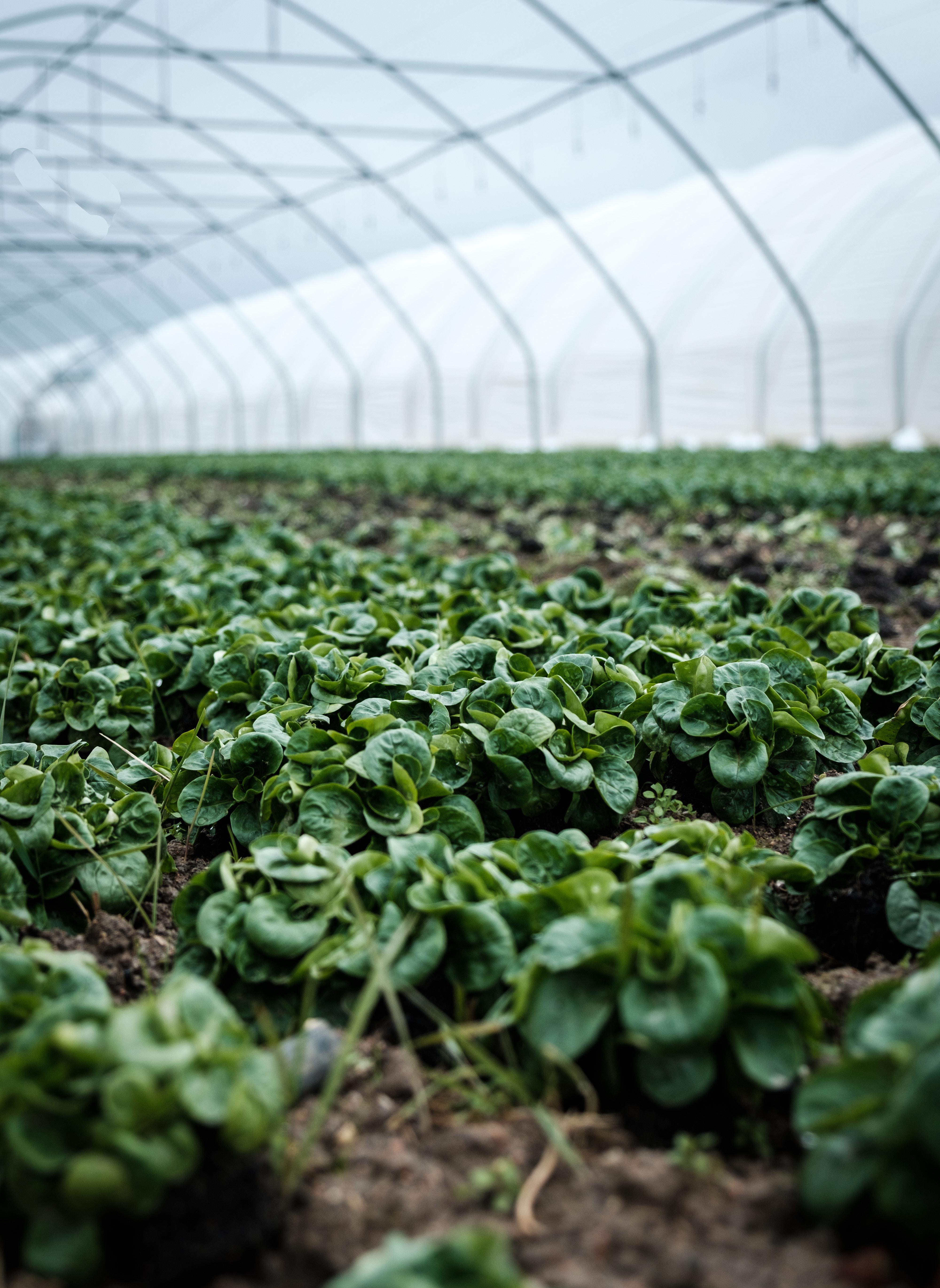 Agriculture / Plantation