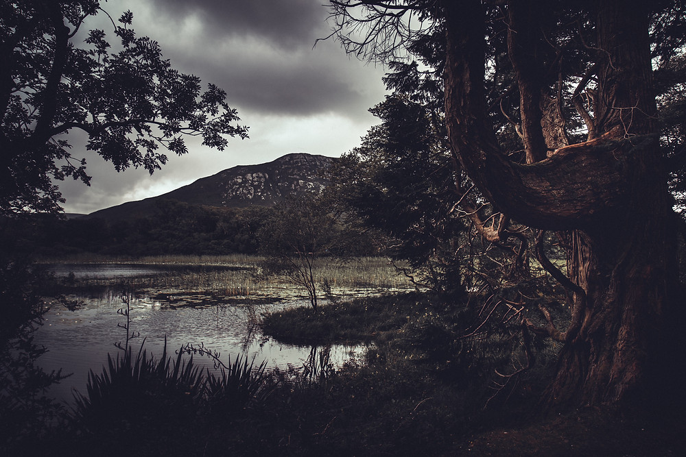 Trees, wetlands and hills under a cloudy sky