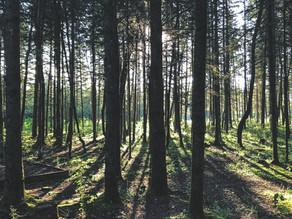 Walk in the woods.....