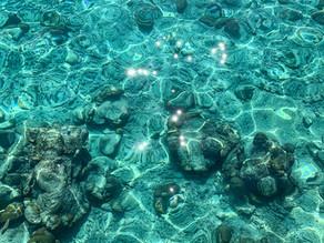 Dzień ósmy - Gdzie jest Nemo i kim jest George? Nurkowanie na Wielkiej Rafie Koralowej.