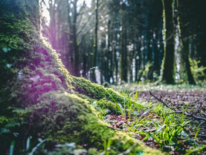 Event: Creating business value, restoring native woodlands