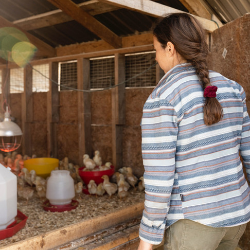 5 Reasons to Raise Baby Chicks in Fall