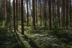 Image by Rural Explorer