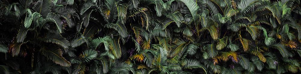 Dżungla zielone drzewa