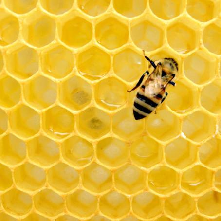 BeesWaxWrap でEco-friendly