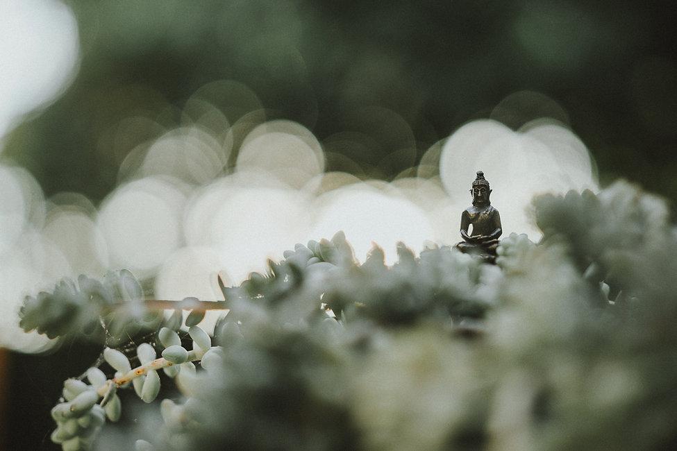 Psychologische Beratung Aneesha C. Mueller. Selbstwertgefühl stärken, Vertrauen aufbauen, Stress bewältigen und zur Ruhe kommen mit aktiver Meditation. Effektive Stressbewältigung durch einfache Entspannungstechniken. Meditieren lernen schenkt Entspannung, Innere Ruhe, Frieden und Klarheit. Die [Exhale Deeply Meditation] von OSHO sorgt für tiefe Ruhe und Entspannung.