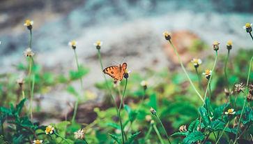Image by Himesh Kumar Behera