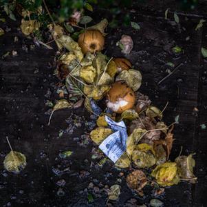 Food Waste & Loss