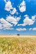 Blue Skies Over Rod Trowbridge memorial Cook airfield fly In event Wichita Kansas