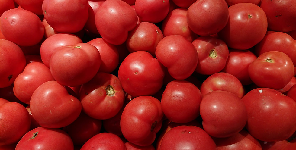 "Tomate ""Big Ghost"""