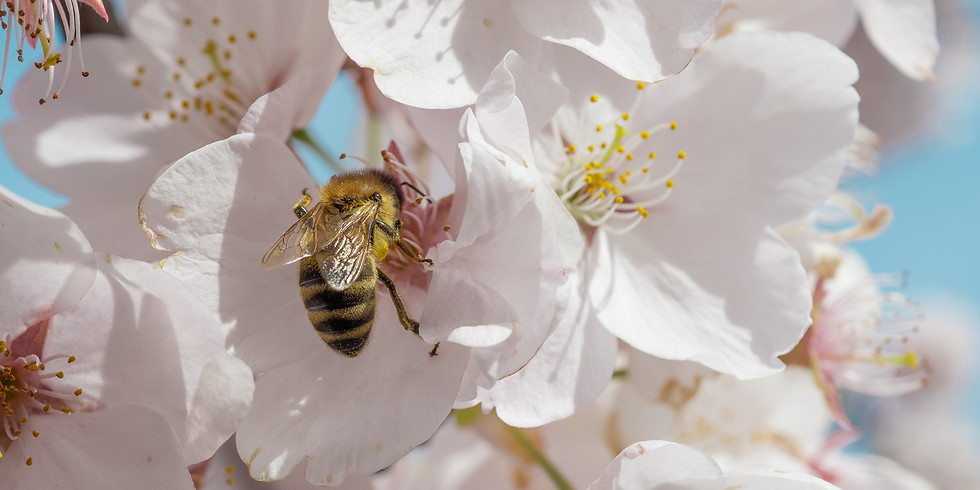 Sober birds & bees meeting