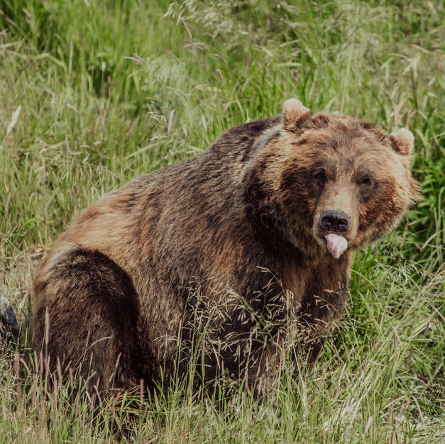 Bear Country Tips